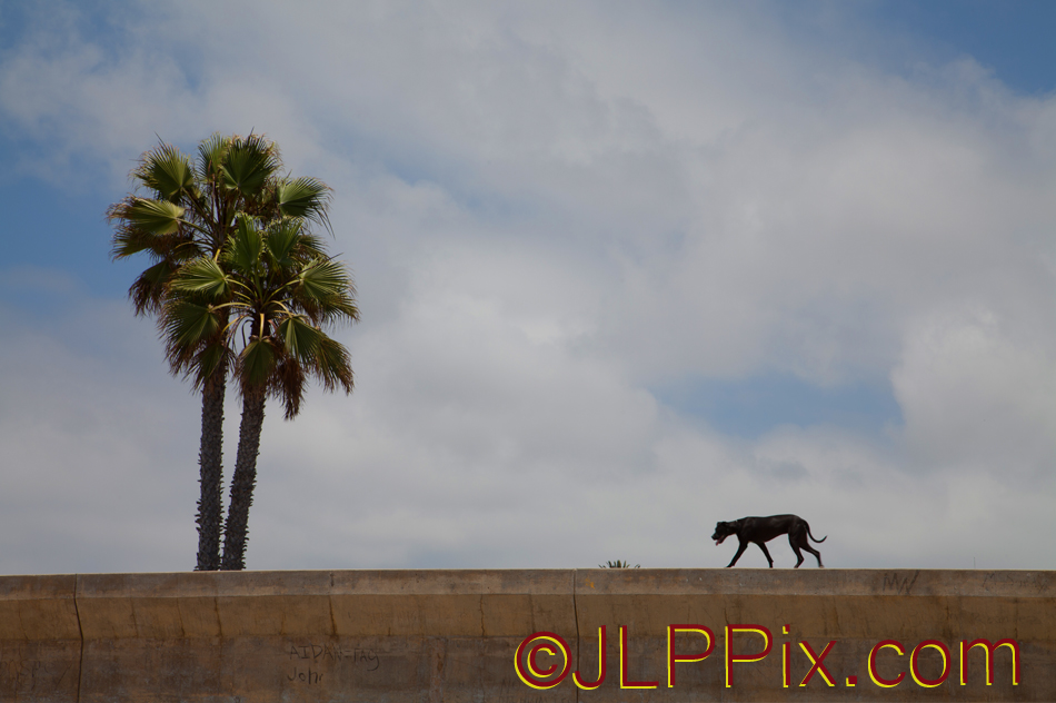 Dog on a wall